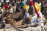 Banker on a Camel