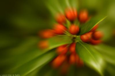 : zoom berries