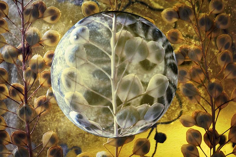: bubble seeds :