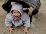 turtle oliver