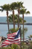 Flag & Palms