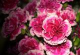 Joyce's Flowers