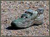 The dog's shoe