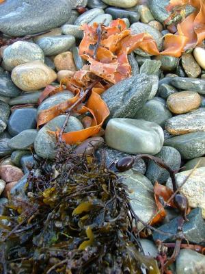 Graceful Sea Debris