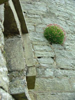 Moher Castle Close Up