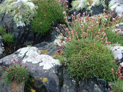 Lichen and Pink Flowers