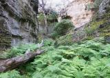 Bracken in a gorge
