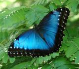 Butterflies around the globe......