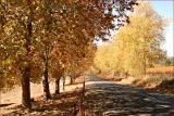 Road to Oakbank