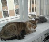Cedi and Viki napping