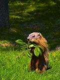 Groundhog Lunch 20050528