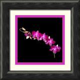 purple pink multiple-framed