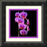 purple spotted bunch-framed