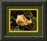 cuttle fish_filtered-framed