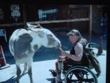 Tammy in Oatman Arizona screen saver