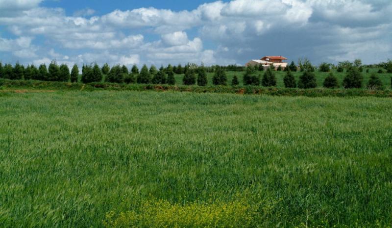 Grass land 1.jpg
