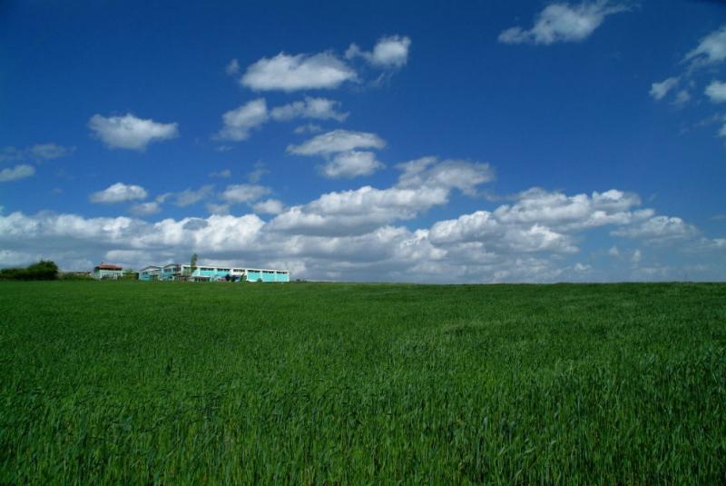Grass land 2.jpg