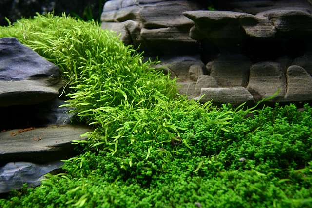 94th day - Utricularia sp.