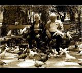 13.05.2005 ... Feeding the pigeons ...