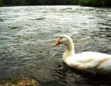 delaware Duck