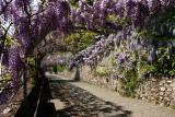 vevey_fleurs.jpg