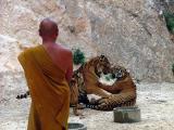 The Monk Looks On