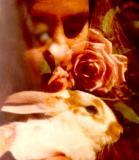 Rabbit double exposure