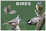 Our feathered friends show off how beautiful they are. Have a look, but unlike them; please keep both feet on the ground.