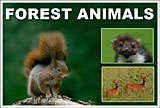 Forest Animal small
