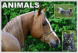 Who has not been stunned by the beauty of an animal's skin or its flexibility in motion? Follow your instincts. Click here.