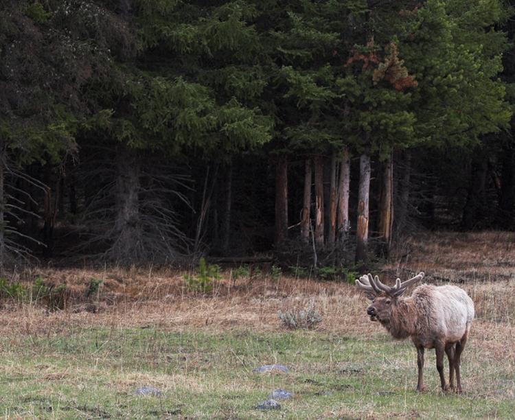 Elk 160