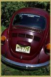Magenta Beetle