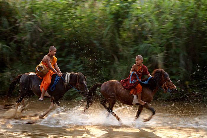 horse monk 1314-02217.jpg
