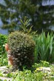 Kübelpflanze vor dem Haus