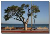Bench, Tree & Bike