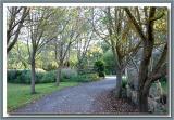 Pear driveway