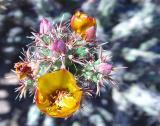 Flora12.jpg