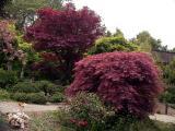 041103_hakone_gardens