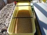 Seed soybeans.JPG
