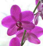 orchid backlit.jpg