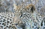 south_africa_2002