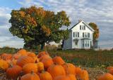 Autumn harvest 2001