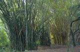 2-30 Ke'anae Arboretum