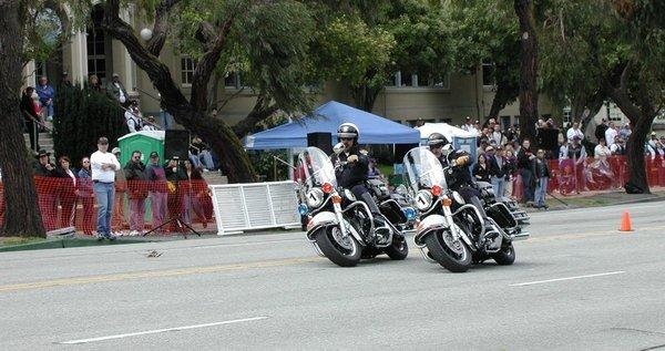 5-Harleys