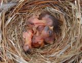 In Peggy's Garden - Spring 2006