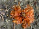 Spent Camellia