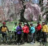 The Weekday Cyclists Cherry Blossom Ride to Branch Brook Park in Essex County, New Jersey. Deryk, Linda, Jane, Trudy, Ann, Carolyn and Don