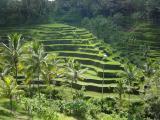 Bali/Lombok/Gili Trawangan