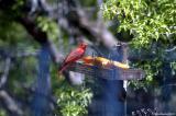 Arizona Birds30.jpg