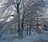 Ice Storm 2003!!  Moncton, New Brunswick